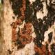 Termite Prevention