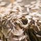 Termites Impact on Your Health