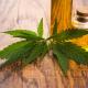 Marijuana leaves and CBD Oil