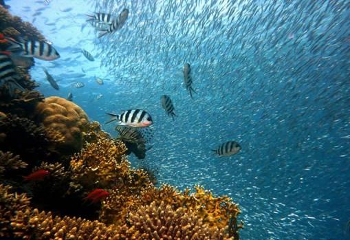 fish swimming deep under the sea