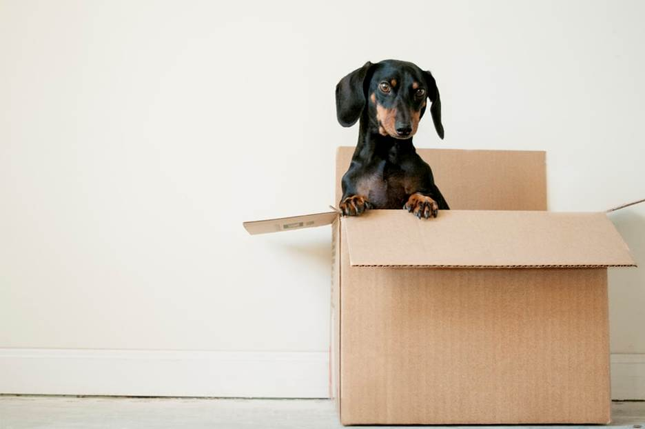 a pet in a moving box