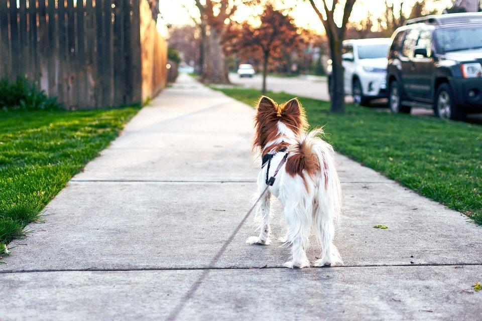 A dog going for a walk with a leash attached