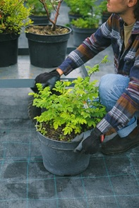 woman attending to her plants