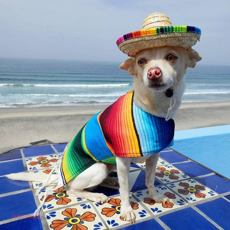 Dog at the beach wearing a customized poncho.