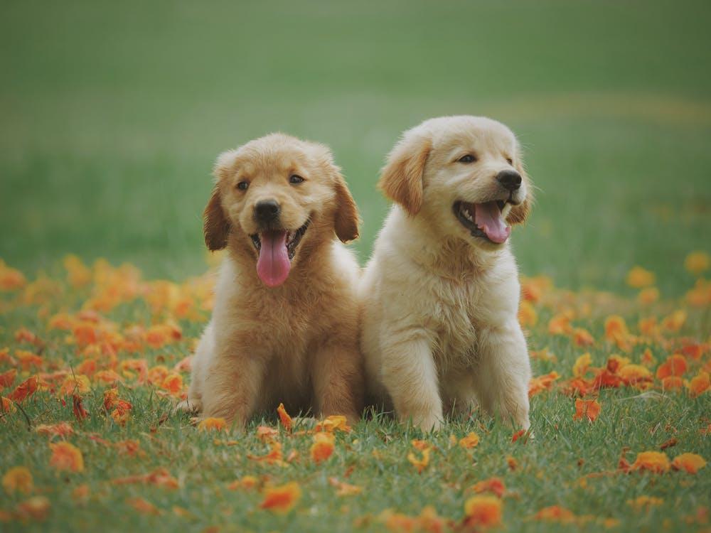 Happy social dogs