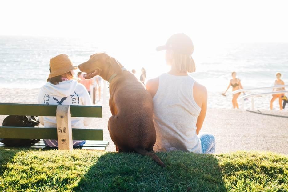 Pet dog enjoying beach time with dog mom