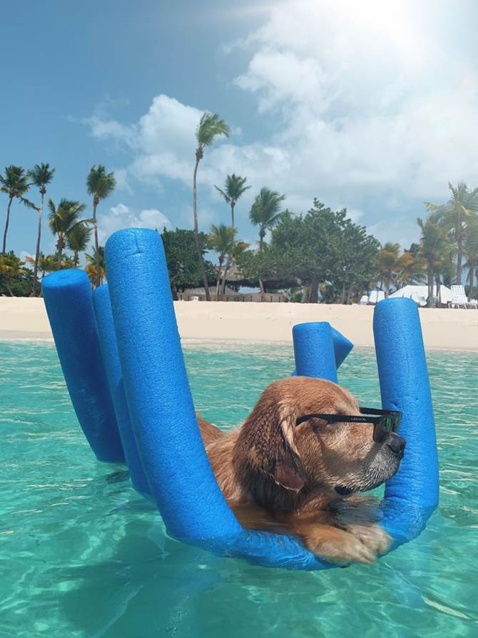 Dog cooling off in a pool