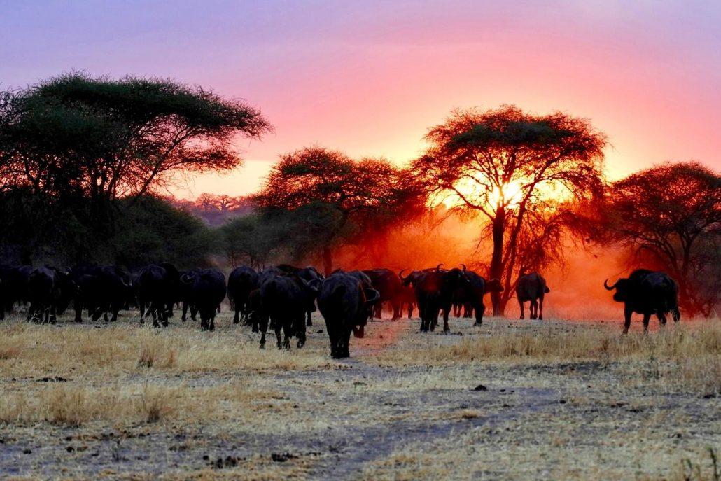 Animals in the wilderness.